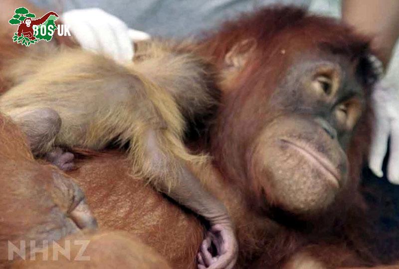 Orangutan Freedom | 5th Feb 2021 Release