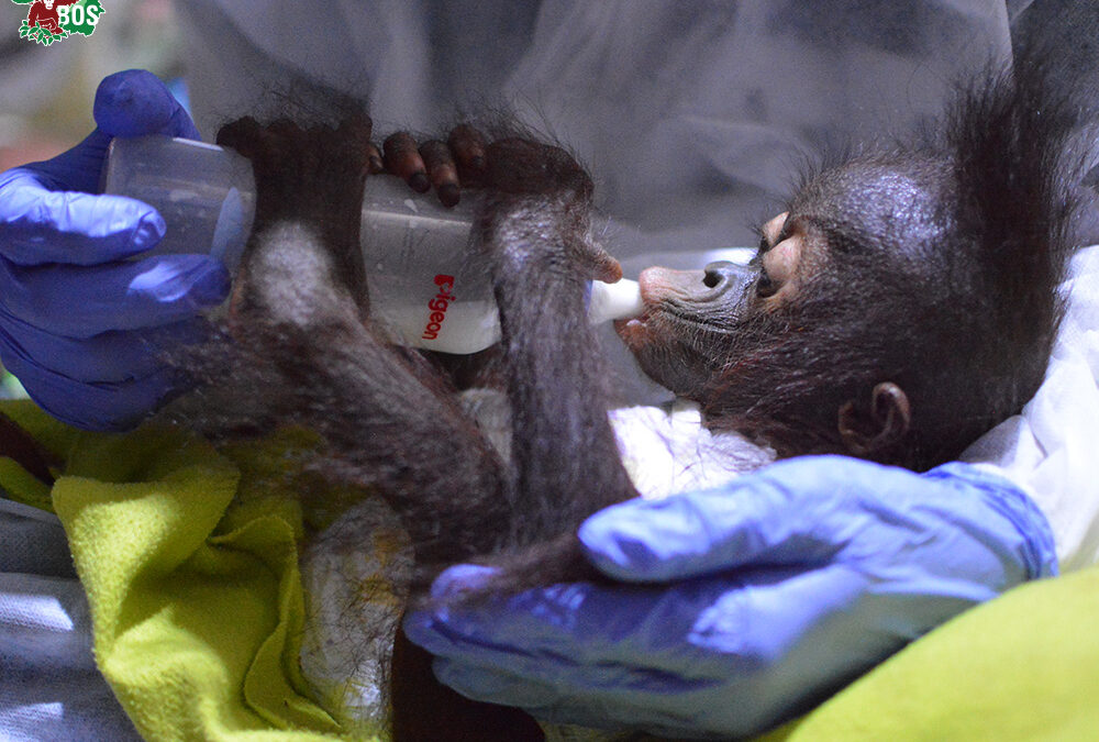 Three Babies Rescued