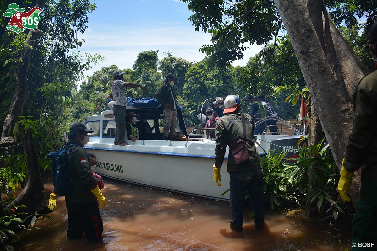 BOS Orangutan Freedom boat arrival