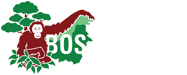 Borneo Orangutan Survival USA