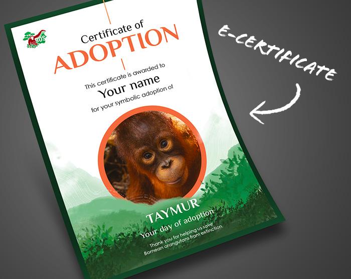 adoption pack 1