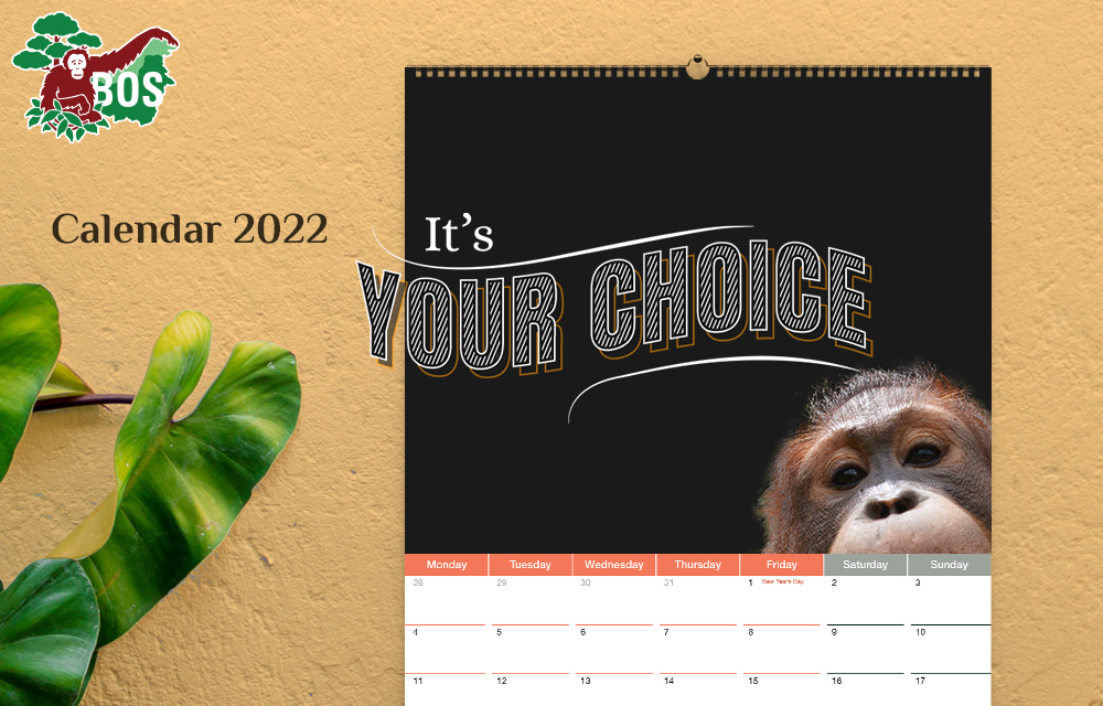 Orangutan Freedom